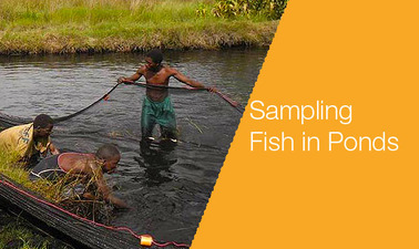 Sampling in ponds1